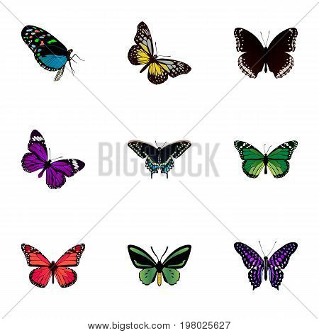 Realistic Polyommatus Icarus, Birdwing, Azure Peacock And Other Vector Elements