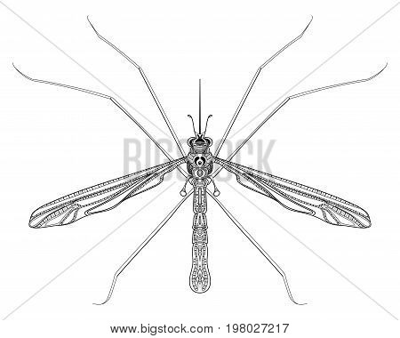 Stylized mosquito. Insect with ornaments. Linear Art. Vector illustration of a mosquito. Zentangle. Pest