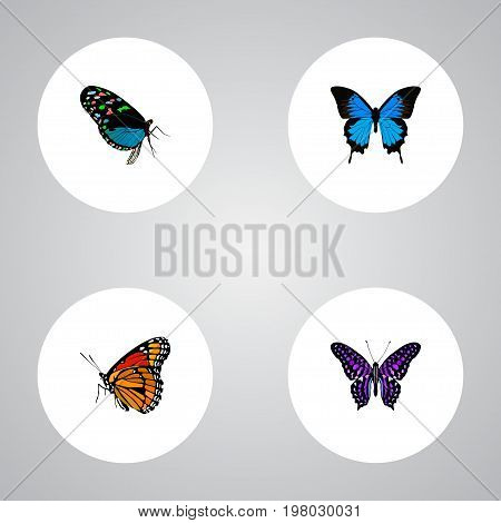 Realistic Hairstreak, Polyommatus Icarus, Common Blue And Other Vector Elements