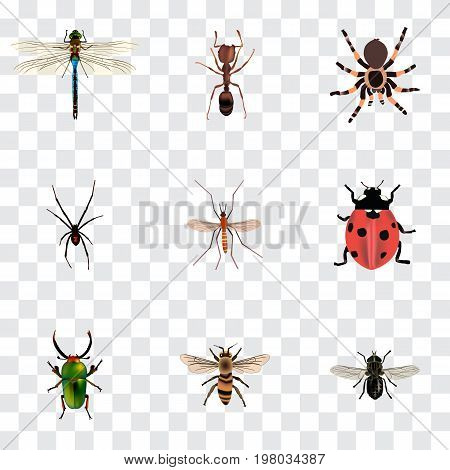 Realistic Wasp, Insect, Tarantula And Other Vector Elements