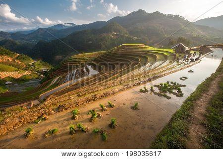 Farmers of Hmong preparing transplant in water season, Mu Cang Chai , Vietnam