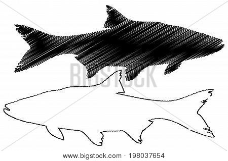 asp silhouette vector , ( Aspius aspius )