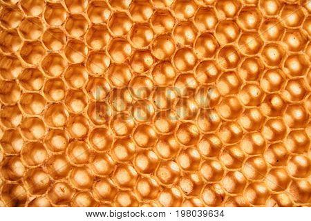 Beeswax Wirhout Honey