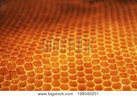 Empty Honey Background