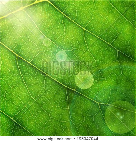 Green Leaf Macro Background.