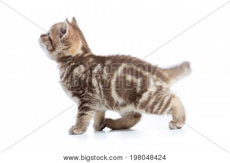 Kitten cat side view