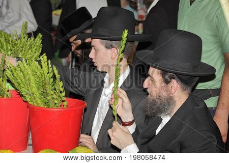 BNEY-BRAK, ISRAEL - SEPTEMBER 17, 2013:  Grand Bazaar on the eve of the Jewish holiday. man with a beard carefully chooses ritual plant - myrtle.   Grand Bazaar on the eve of the Jewish holiday