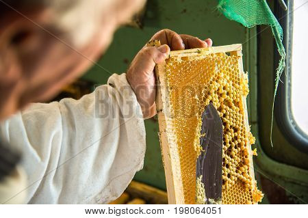 The beekeeper separates the wax from the honeycomb frame. A special knife for separating the wax from the frame with honey