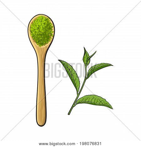 Top view drawing of bamboo, wooden spoon with matcha green tea powder and leaf, sketch style vector illustration isolated on white background. Realistic hand drawing of matcha green tea powder