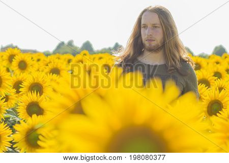 Young caucasian - nordic man with blond and long hairs at sunflowers field