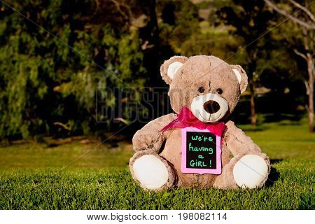We Are Having A Girl - Announcement Message For Expecting A New Baby Girl - Teddy Bear Sitting On Gr