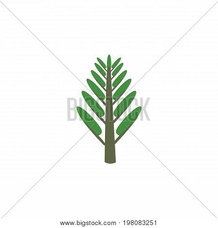 Jungle Vector Element Can Be Used For Jungle, Willow, Tree Design Concept.  Isolated Willow Flat Icon.