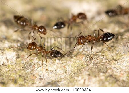 ants on the ground. close-up . A photo
