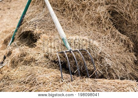 Classic pitchfork on a pile of hay.