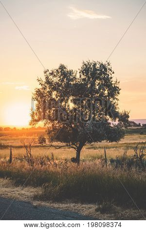 Lone Tree In Countryside Sunset