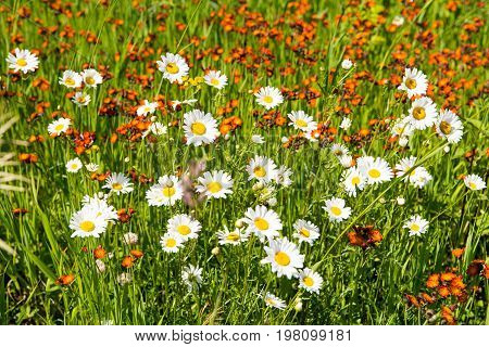 Blooming meadow in Cascade River State Park in northern Minnesota USA