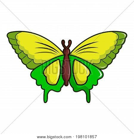 Goliath birdwing butterfly icon. Cartoon illustration of goliath birdwing butterfly vector icon for web design