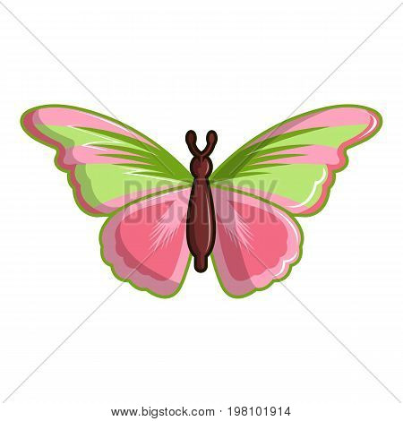 Esmeralda butterfly icon. Cartoon illustration of esmeralda butterfly vector icon for web design
