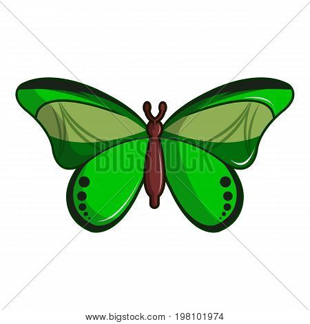 Butterfly great mormon icon. Cartoon illustration of butterfly great mormon vector icon for web design