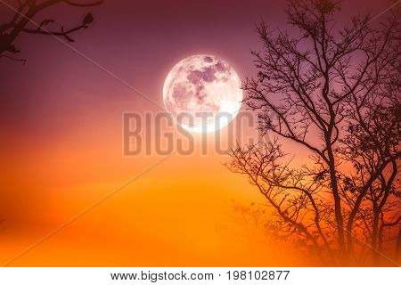 Landscape Of Colorful Sky, Foggy Is Swinging Between Dry Tree And Moon.