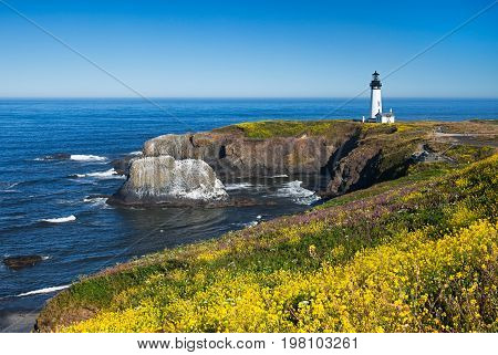 Yaquina Head Lighthouse with a field of wild flowers, Oregon, USA