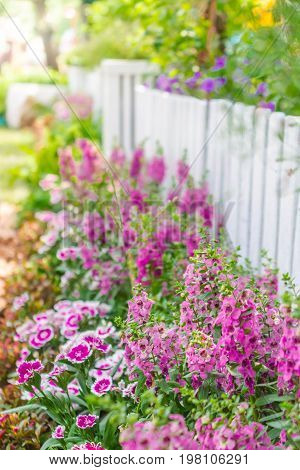 White picket fence and flowers in garden on summer.