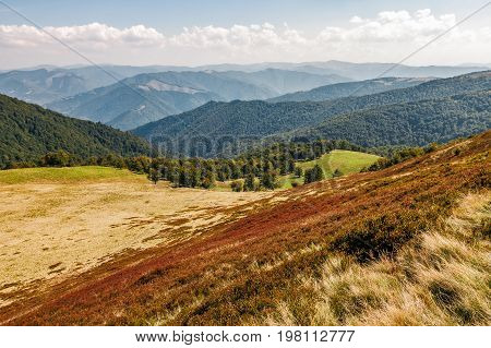 Reddish Weathered Grassy Carpet Of Hillside