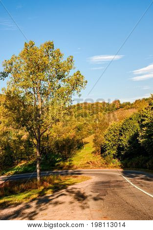 Trees By The Road In Autumn Mountains
