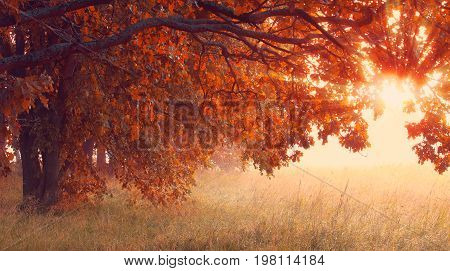 Sunny autumn scene. Red foliage on trees in sunlight. Sun illuminate tree with red leaves in the morning. Misty autumn sunrise. Hallowing time background.