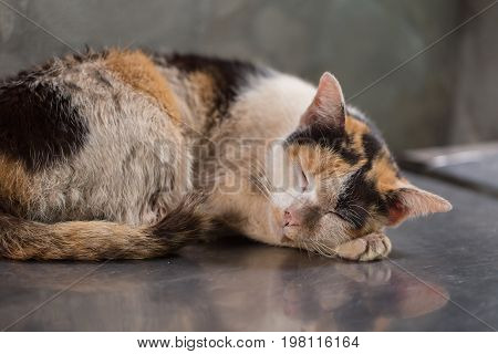 Sleeping Kitten Dirty Homeless Kitten Starve Stray Cat Dirty Unclean Market Place.