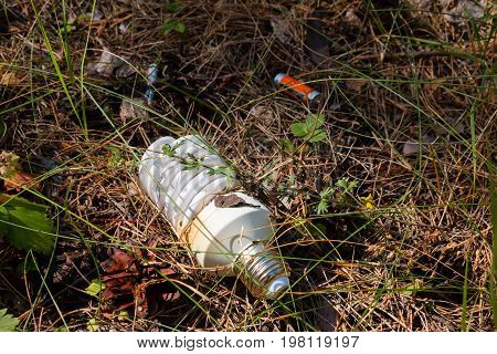 Light Bulb And Batteries - Hazardous Waste In The Woods