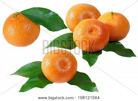 Mandarin fruits colleague isolated on white background