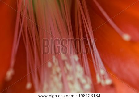 Floral abstract (shallow depth of field)