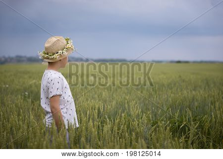 Back view on cute kid boy in straw hat and chamomile wreath walking on rye or wheat field and picking up flowers. Child and nature.