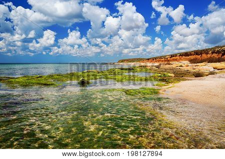 seascape shore with clear water and rocks covered with algae in transparent water