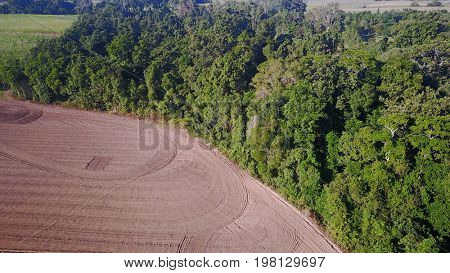 Deforestation. Environmental damage. Rainforest