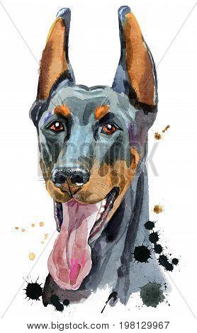 Cute Dog. Dog T-shirt graphics. watercolor doberman illustration