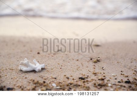 A beautiful white coral on the beach