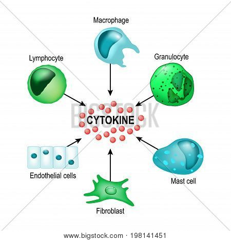 Cytokines are produced by macrophages lymphocytes mast cells endothelial cells and fibroblasts. Cytokines include chemokines interferons interleukins lymphokines and tumour necrosis factors but not hormones or growth factors