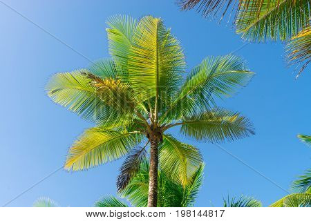 Coconut Palm Tree Perspective View From Bottom Floor