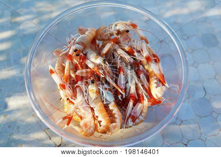 Fresh langoustines in a plate close-up outdoors