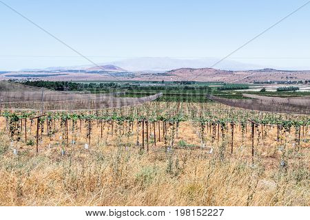 Field with fresh planting of leguminous crops in the lowlands of the Golan Heights in Israel.