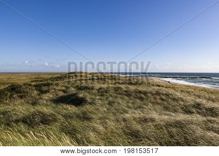 National park Thy in Denmark, with blue sky