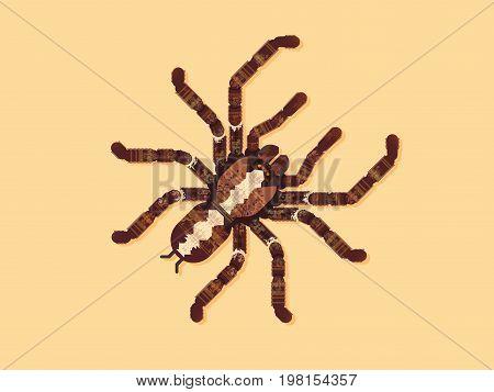 Spider Tarantula. Vector Illustration. grunge. design. insect