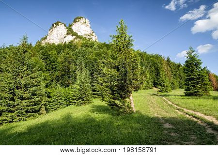 Empty trekking trail in summer forest in national park Mala Fatra Slovakia