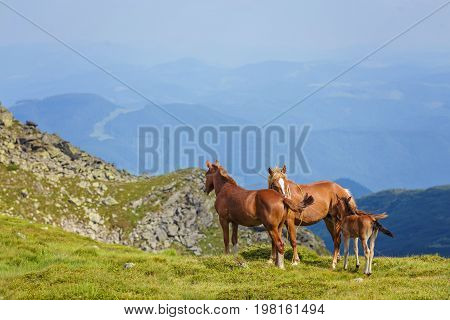 Horses In A Meadow.