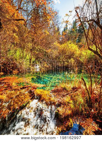 Beautiful Natural Pond With Emerald Crystal Clear Water