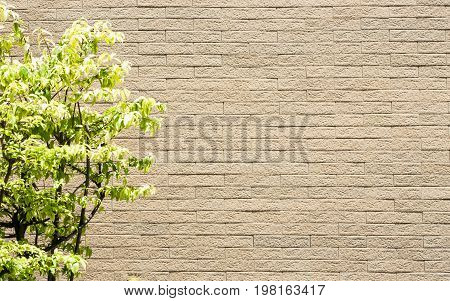 Contrast between life and no life to show by tree and wall