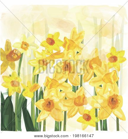 narcissus spring flower with stem and leaves, sketch vector illustration isolated . Realistic hand drawing of daffodil spring flower in vertical position