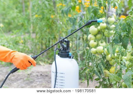 Spaying vegetables with water or plant protection products such as pesticides against diseases and pests